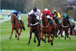 Horse racing Packages